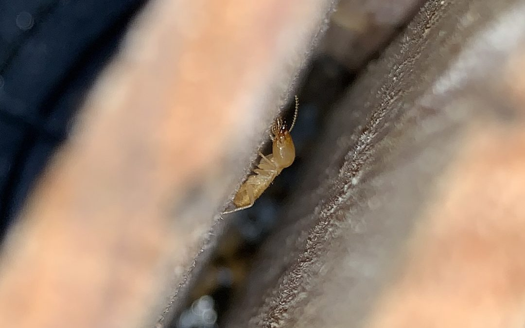 Termite Detection is what we do